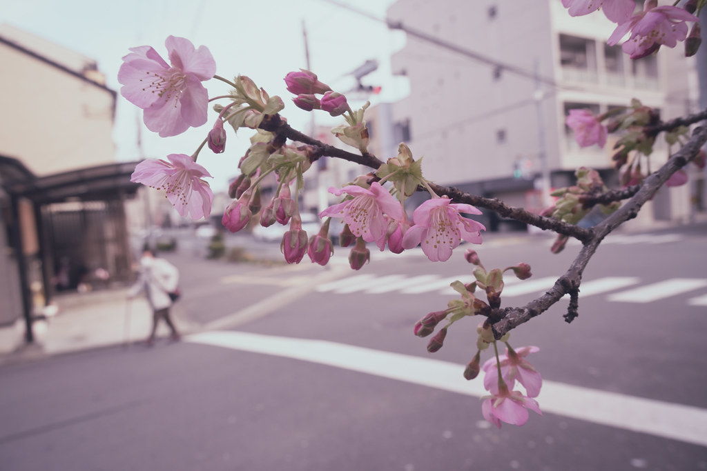 Bloom In Town 2