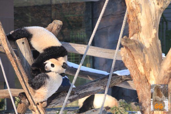 Besuch Zoo Berlin14.02.21066