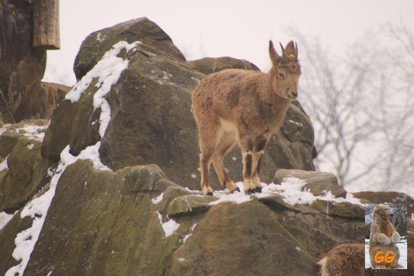 Besuch Zoo Berlin14.02.21003