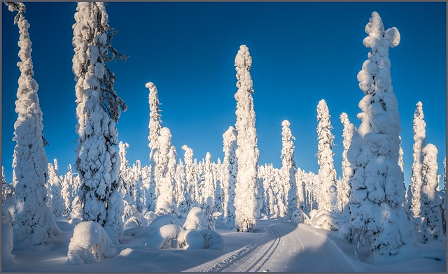 Cross-country ski trail in the fairytale forest