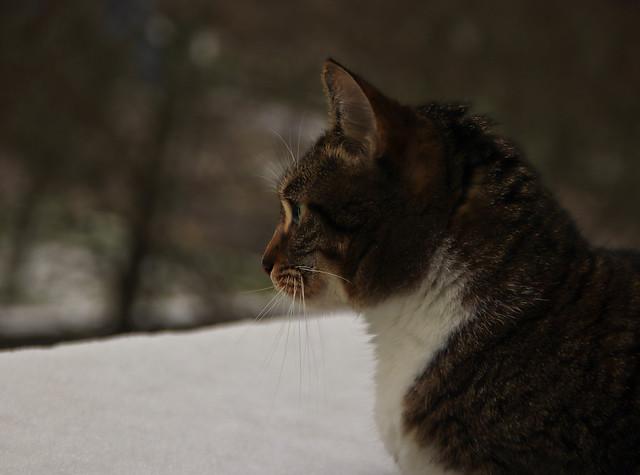 Galice dans la neige