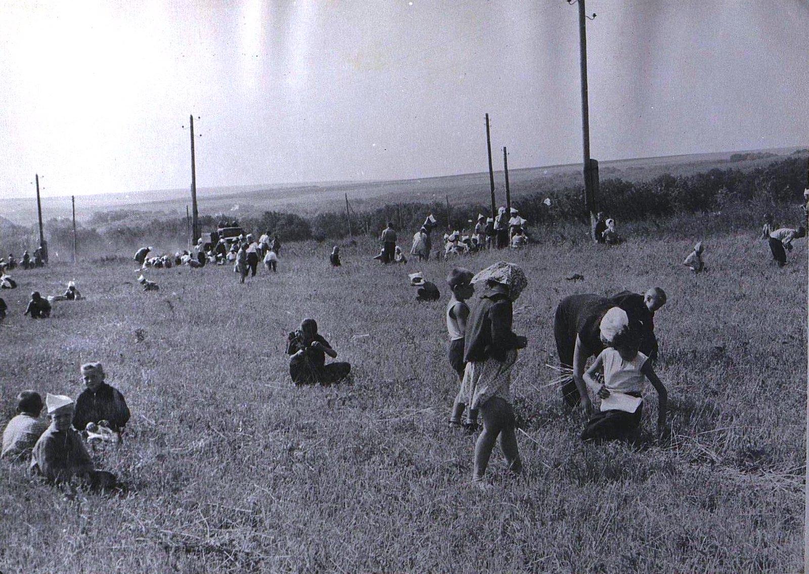07. Пионерская дружина за работой в поле