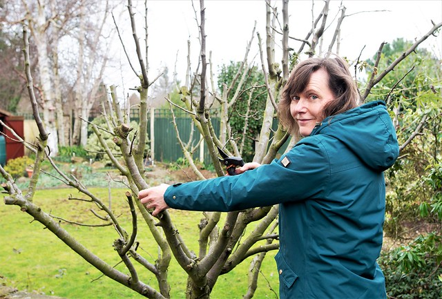 Pruning the conference pear tree.