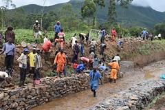 Turning marshes to farmland in South Kivu, Congo