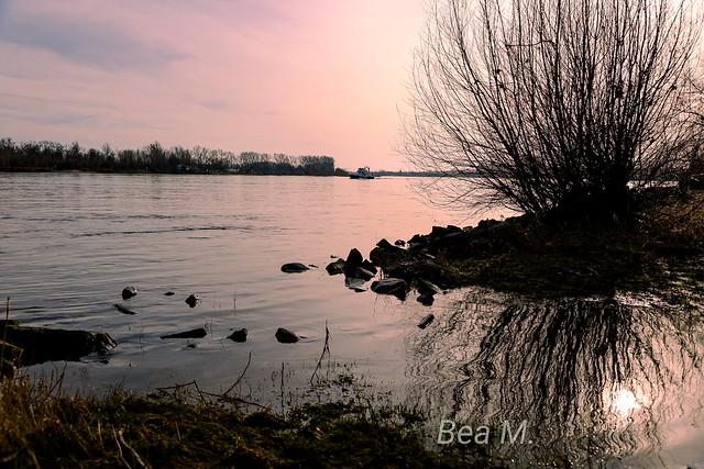 Februar am Rhein, schöner sonniger Tag