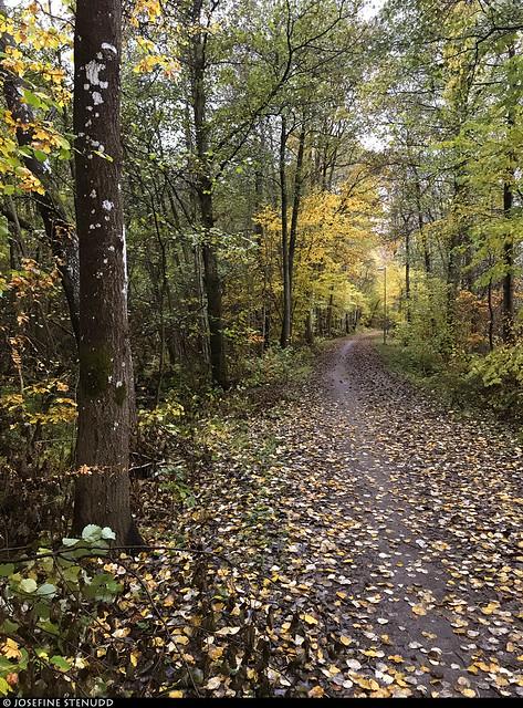 20191017_i1 Autumn forest trail along the railroad between stations Aspedalen & Aspen | Lerum, Sweden