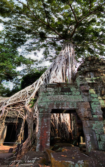 Wild nature in Angkor Thom