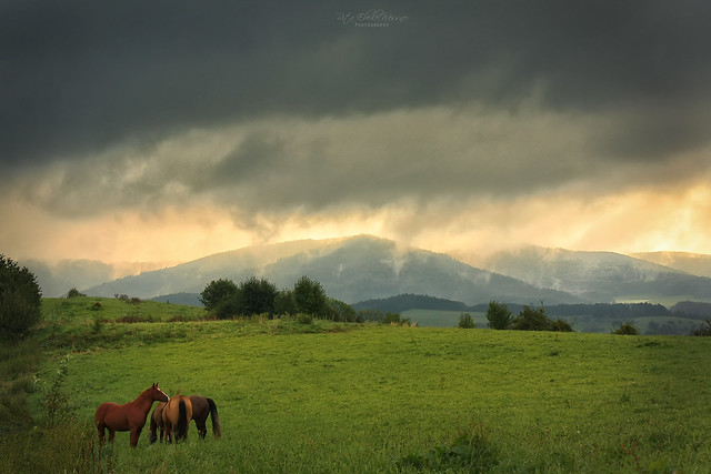 Three horses at sunrise
