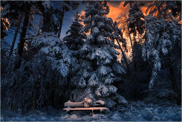 Eine Bank im Winterwald