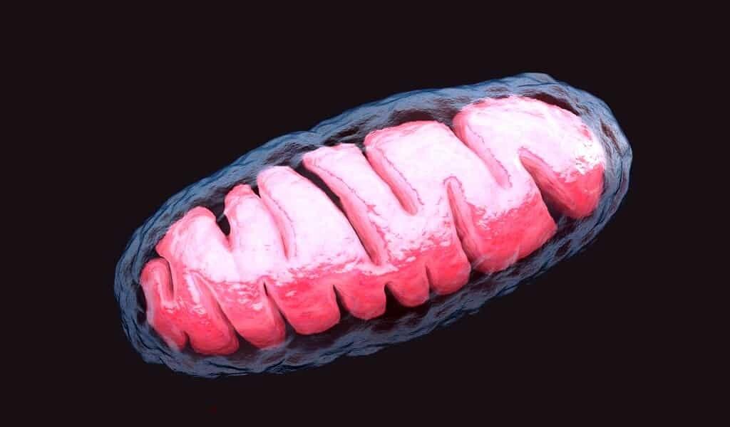 guérir-certaines-maladies-via-les-mitochondries