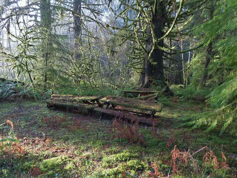 Old picnic tables