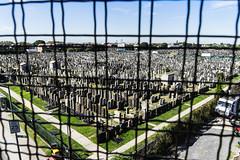 Cemetery--Brooklyn