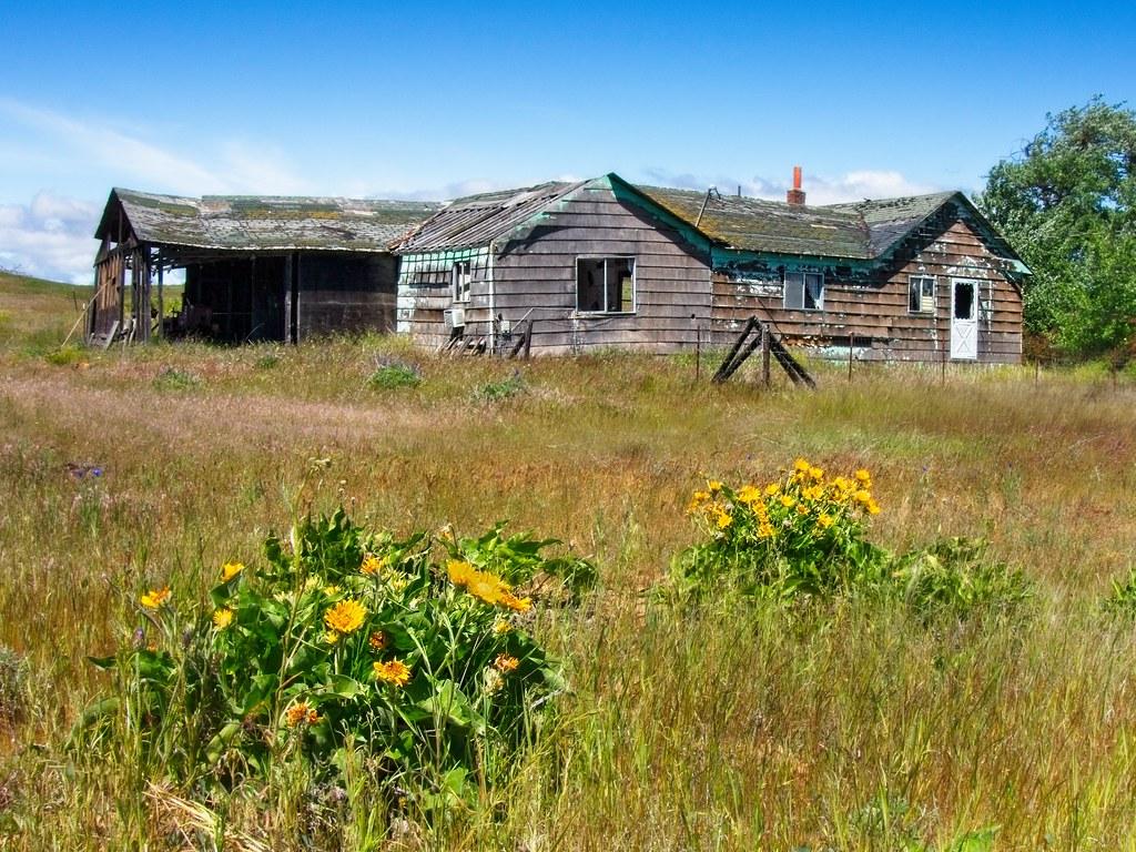 Abandoned Farm Wildflowers 3161 A
