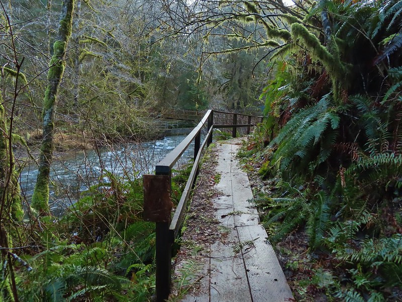 Path to a closed suspension bridge over the North Fork Nehalem River