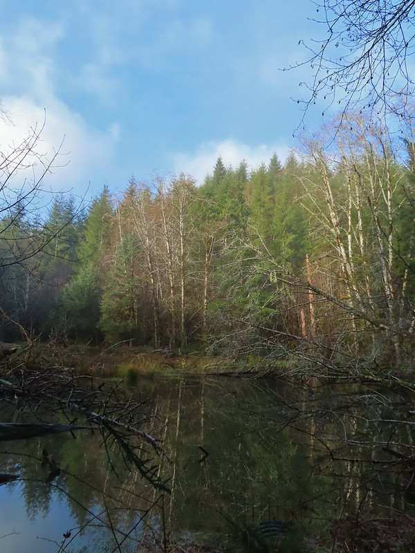 Pond along North Fork Road