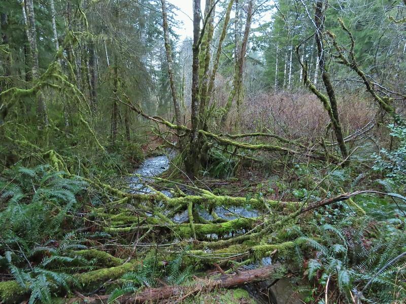 Stream along North Fork Road