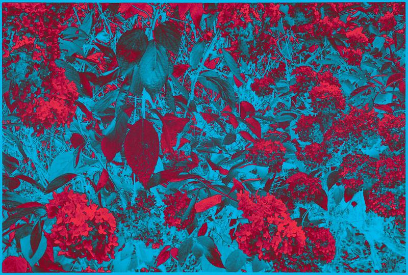 Flower Dimension