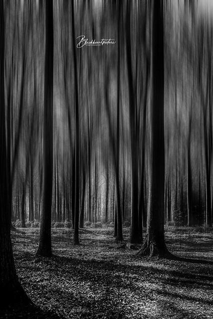 The Darkest Darkforest....