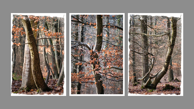 woodlands triptych (2/2)
