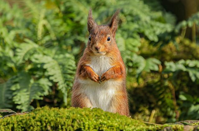 Red Squirrel Explored