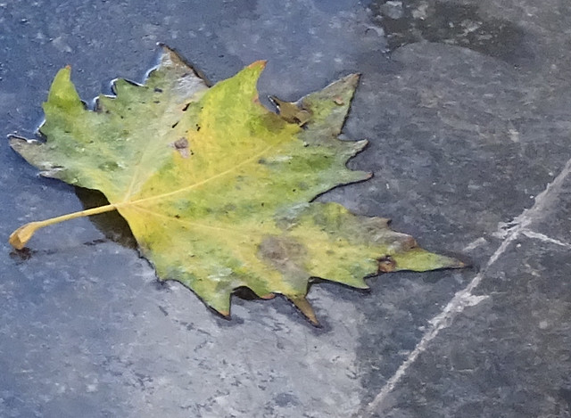 Leaf That Did Fall