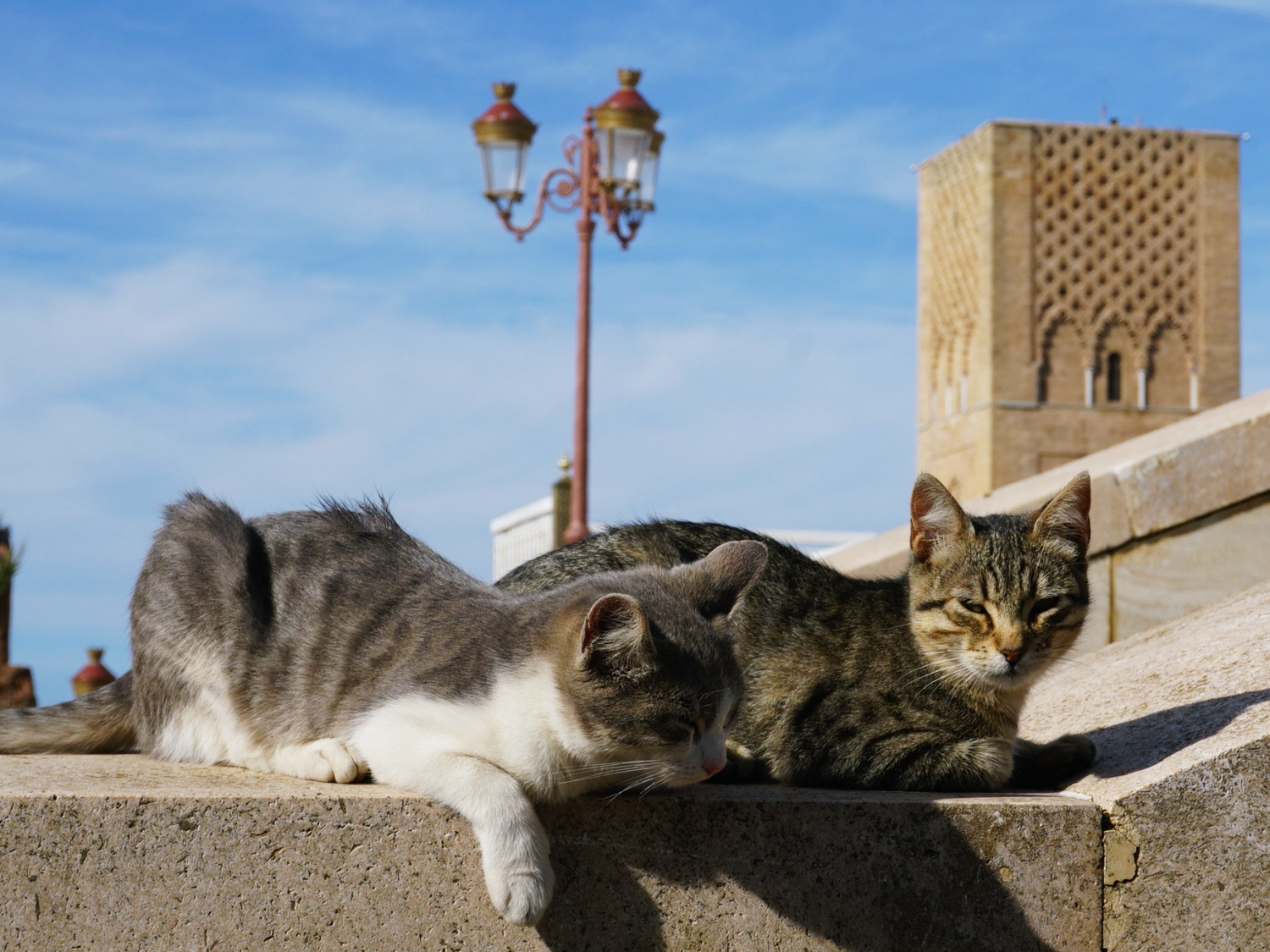 Hassan Tower cats