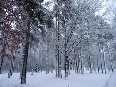 White and frosty.  (由  heiliruutel
