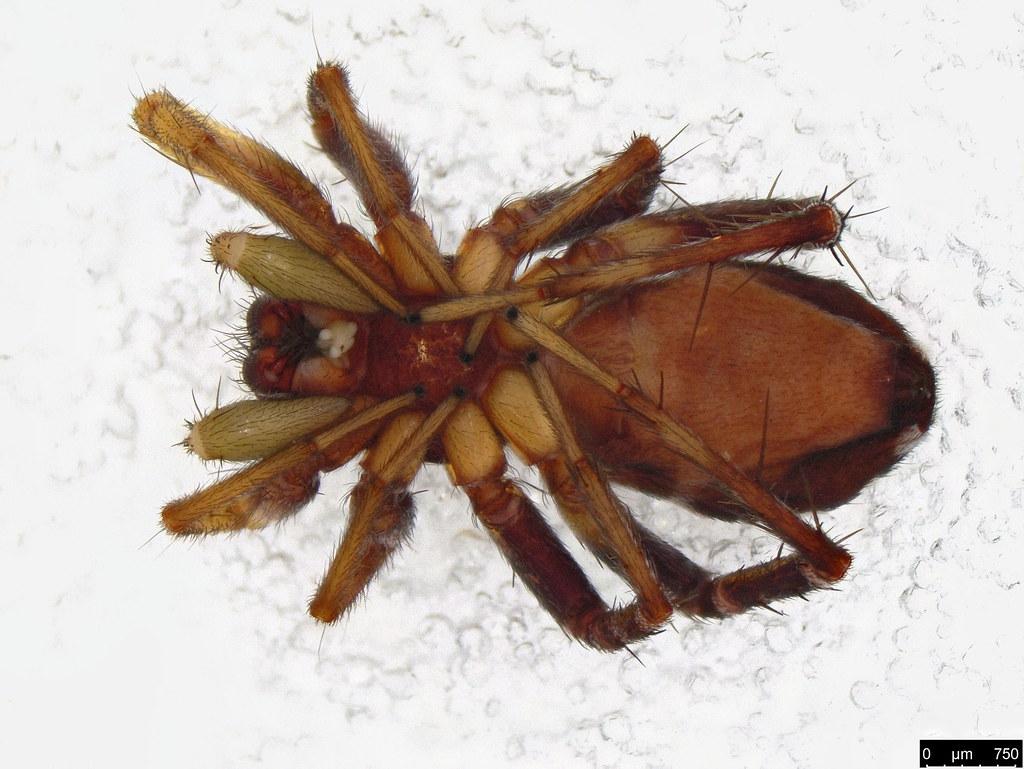 1b - Araneae sp.