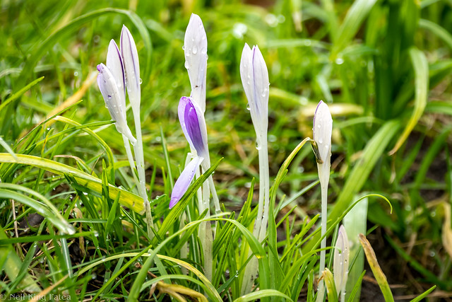 Glimpses Of Spring - Photocredit Neil King-1
