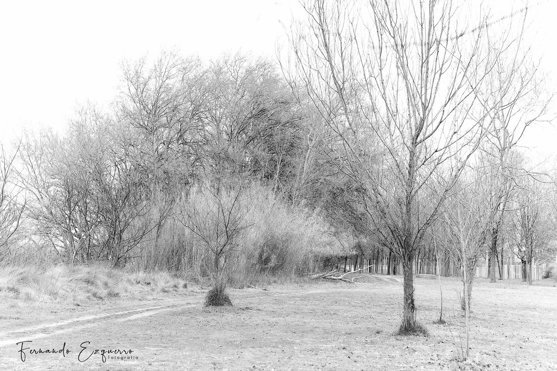 """Paseando por el Soto de Ranillas y el Parque del Agua """"Luis Buñuel"""""""