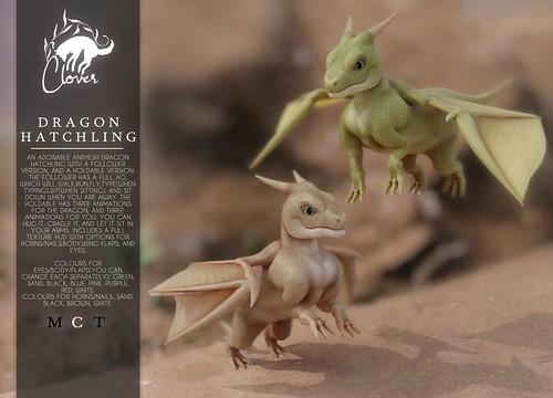 Clover - Dragon Hatchling