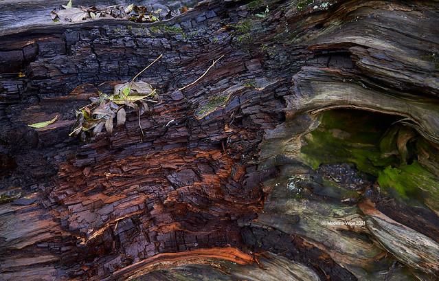 Resting on a fallen tree/Descansando en un árbol caído