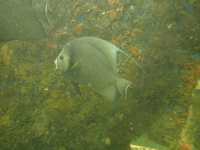 Wednesday 24 FEB 2021 Lagoon Shore Dive/Snorkel
