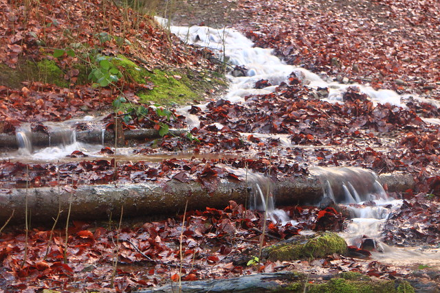 Cascades among the Leaves