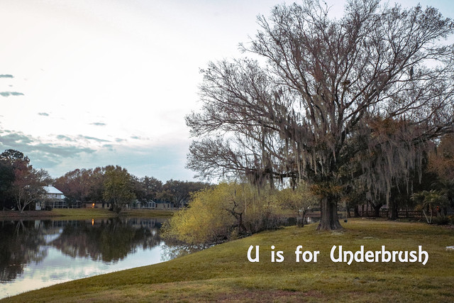 U is for underbrush