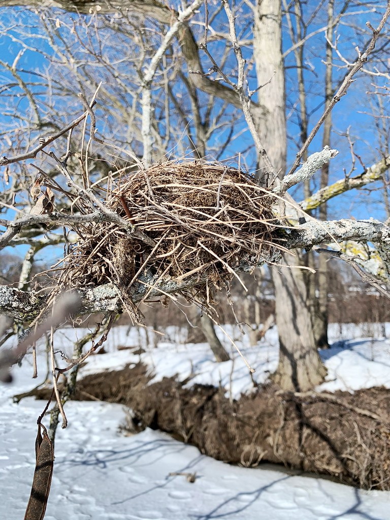 An Old Bird's Nest