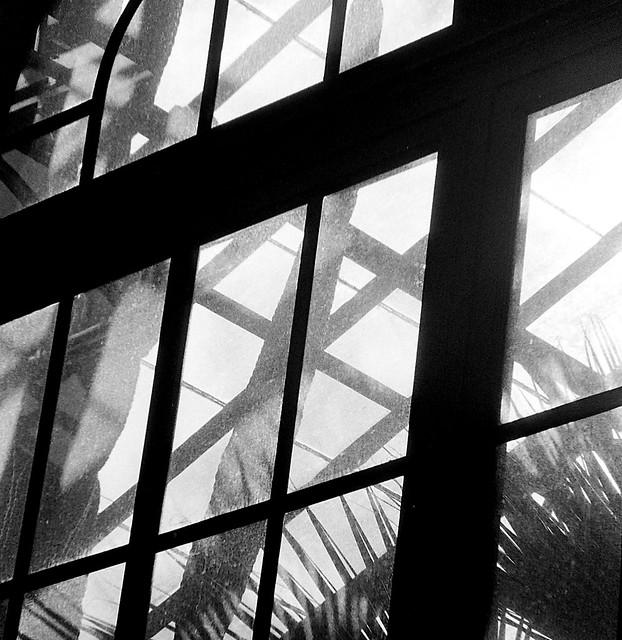 Longwood Abstract