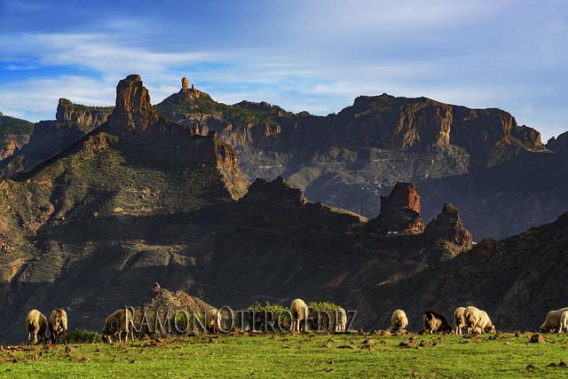 Vega de Acusa en Artenara - Gran Canaria - ROF5546-20201223