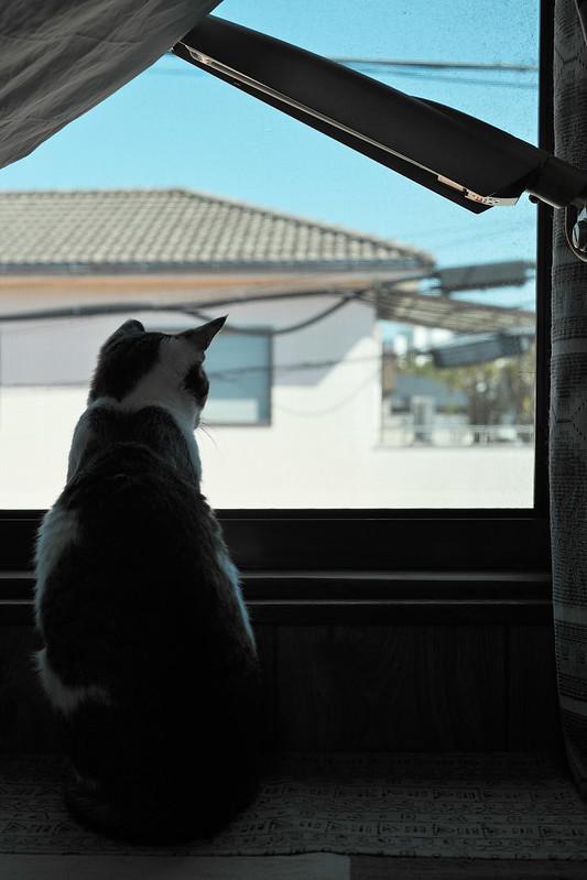 Japanese Cat Day (22 FEB.)