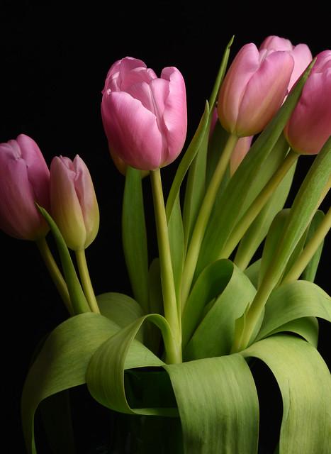 Flowers 21