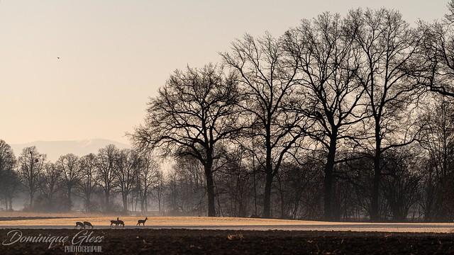 Sérénité matinale - Morning serenity