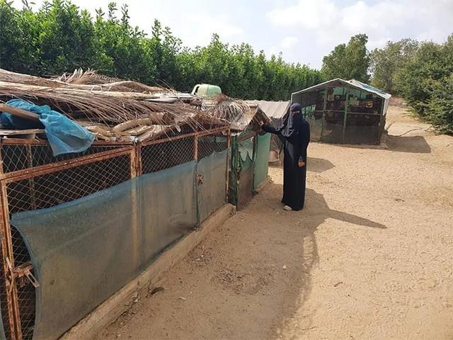 5936 Saudi graduate woman starts animal farming 02