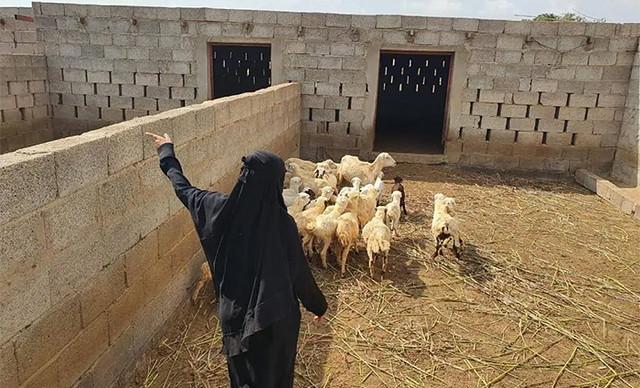 5936 Saudi graduate woman starts animal farming 03