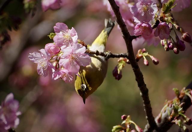 はーるよ来い!! Come spring−1 冬ごもり(巣籠もり)💜 Stay in Winter (Stay in the Winter nest)-84