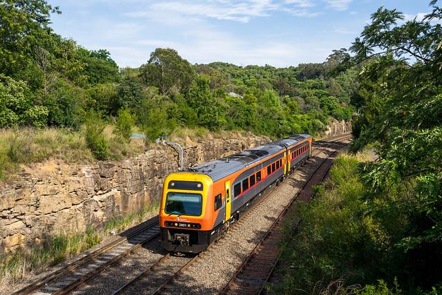 A train among the trees