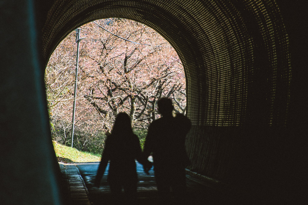 長篠 河津桜トンネル