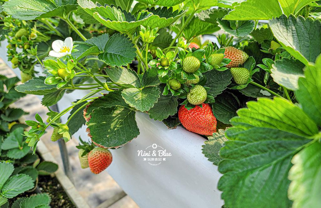 南投草屯採草莓 536無毒果園09