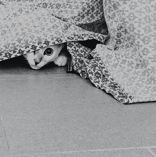 053: I spy you, Dora