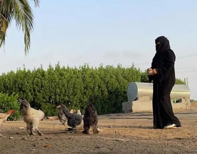 5936 Saudi graduate woman starts animal farming 012