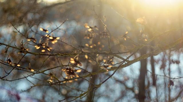 Свет января / The light of January